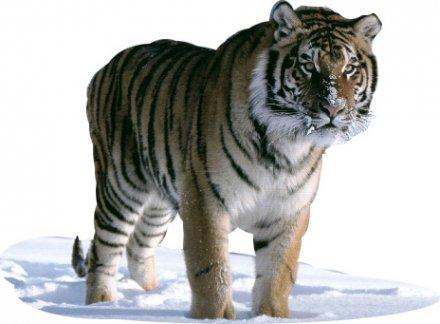 Losar 14 fév. 2010 - Année du Tigre de Fer